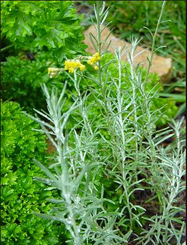 Image via Pantry Garden Herbs