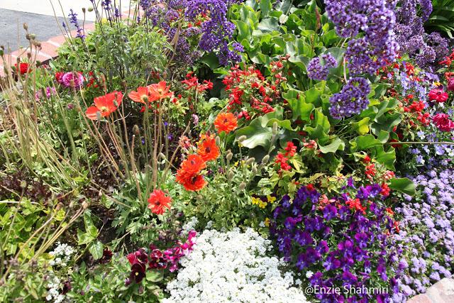 Colorful+Flower+Bed.jpg