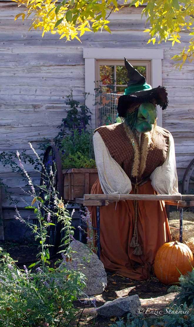 Witch-in-Pumpkin-Patch.jpg