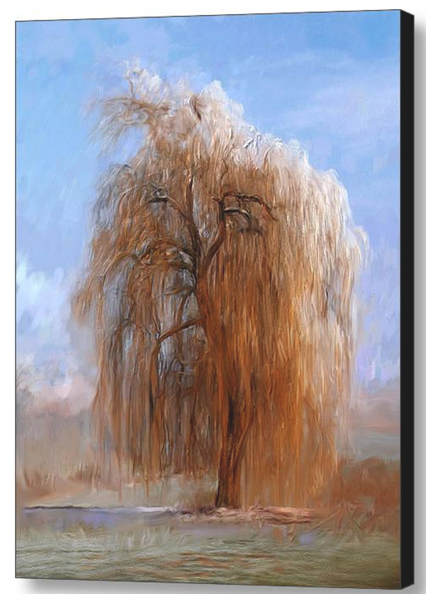 weeping-willow-canvas-print.jpg