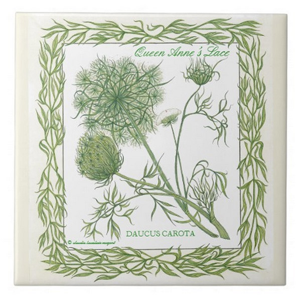 Queen Ann's Lace Tile