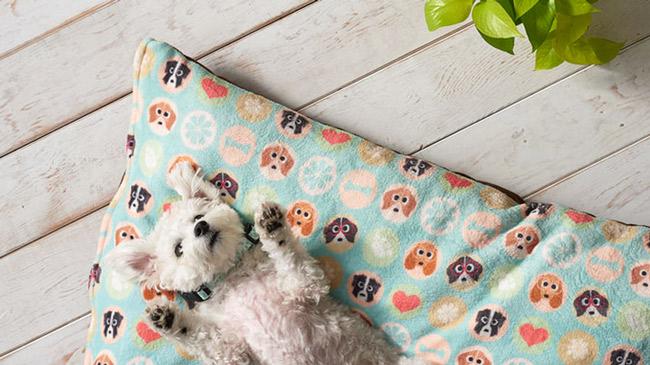 dog-beds.jpg