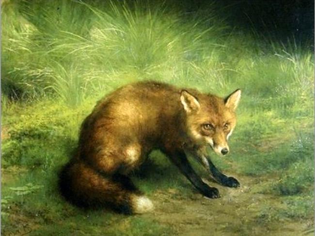 Fox Postcard
