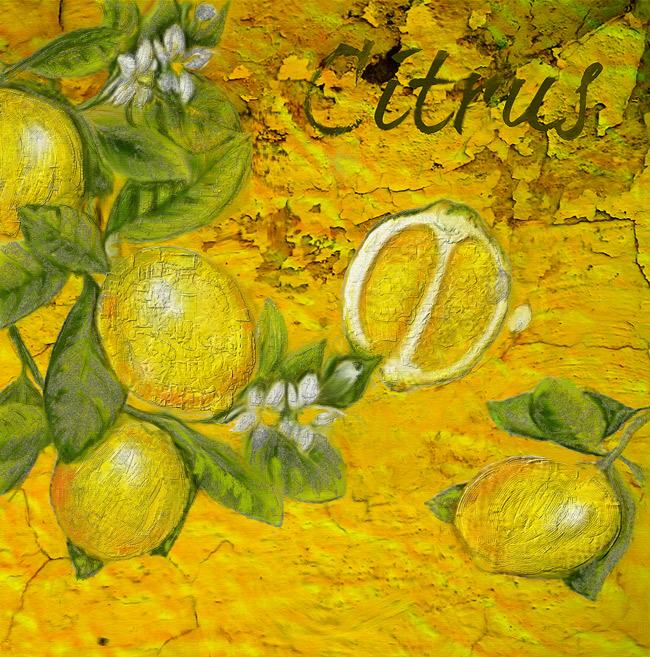 citrus-by-enzie-shahmiri.jpg