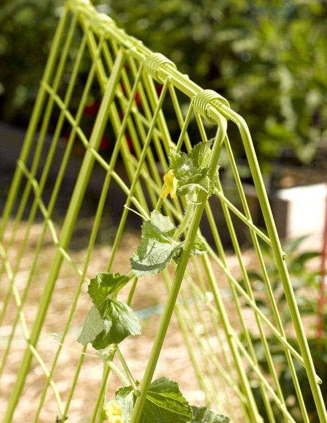 cucumber-trellis.jpg