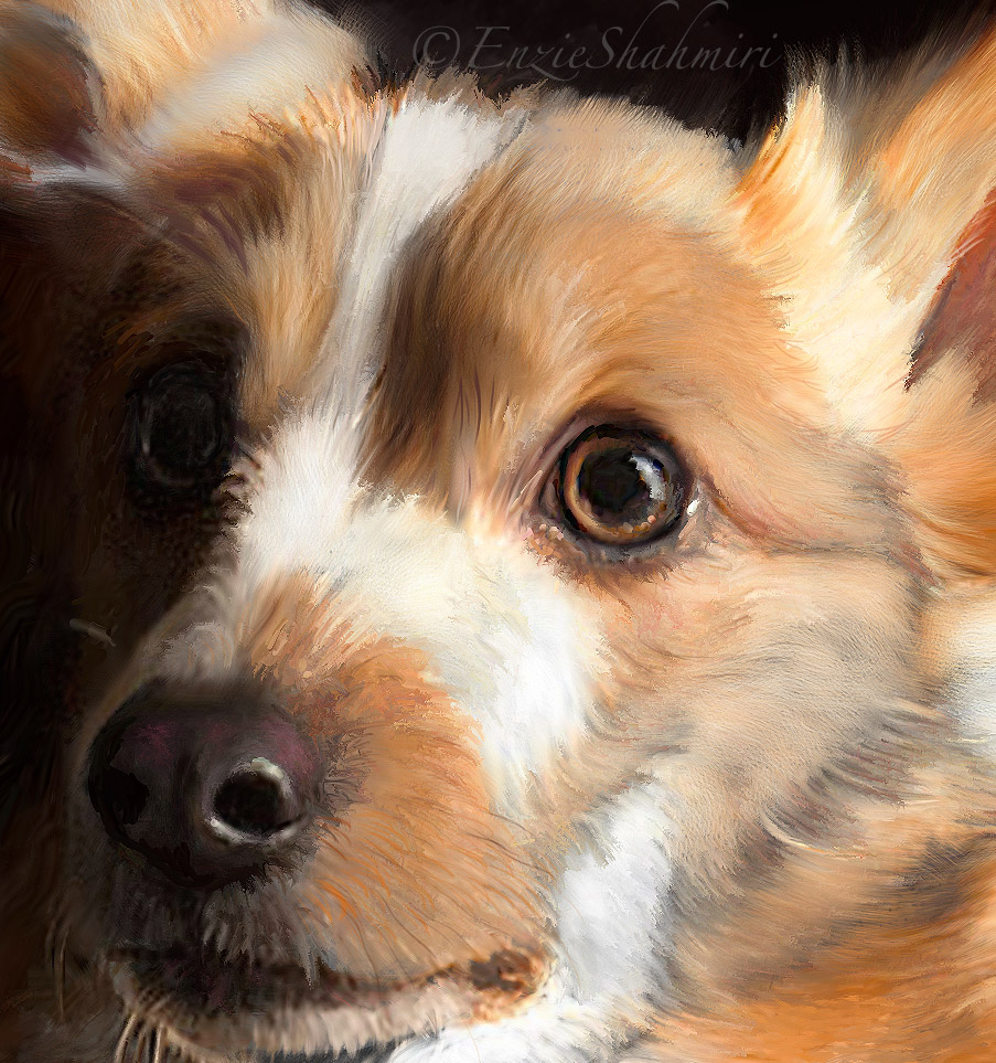 corgi-head-detail-portraits-by-nc.com.jpg