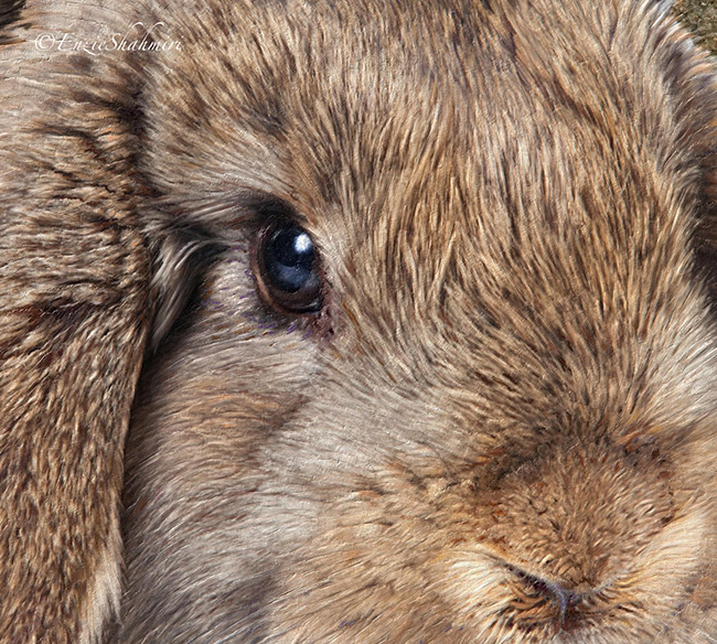 rabbit-painting-close-up.jpg