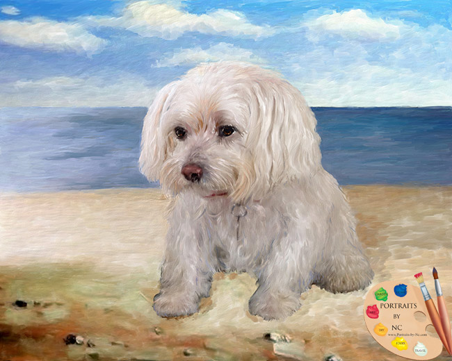 Maltese on a Beach by Portraits-by-Nc.com