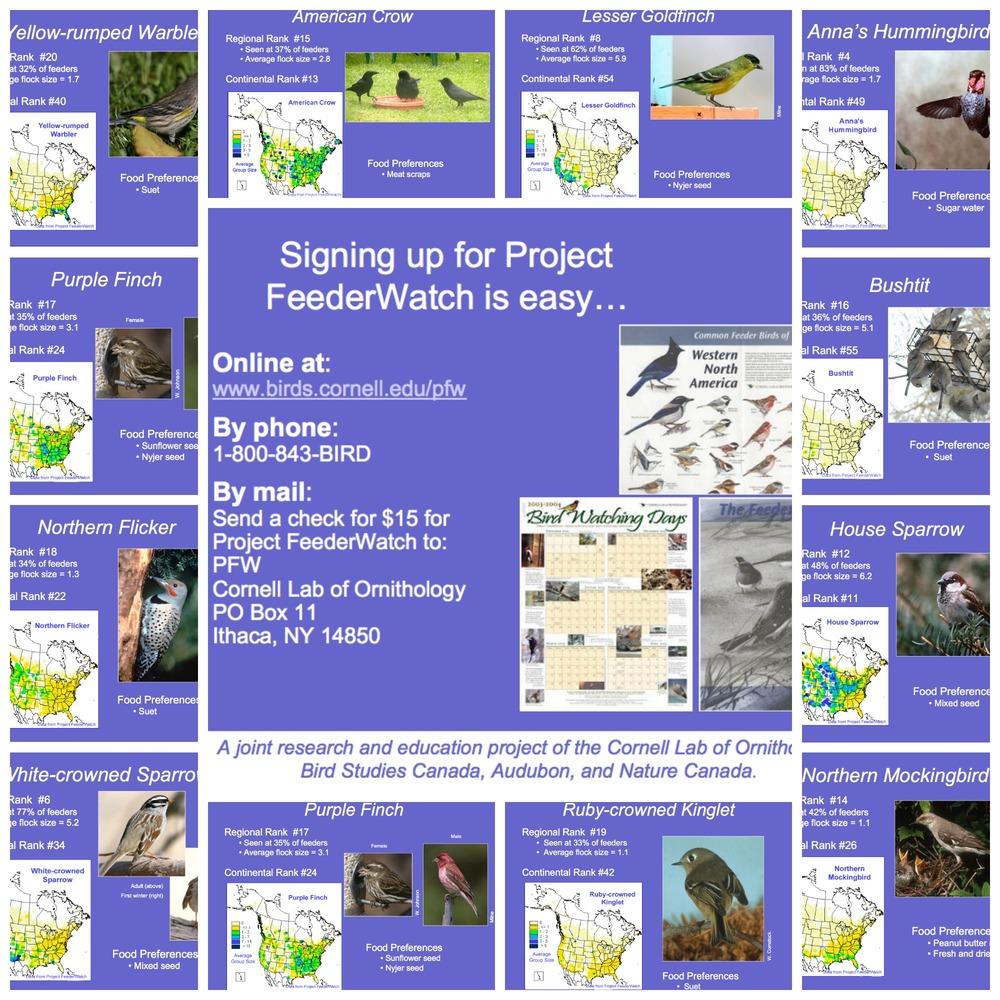 california-bird-feeder-watch.jpg