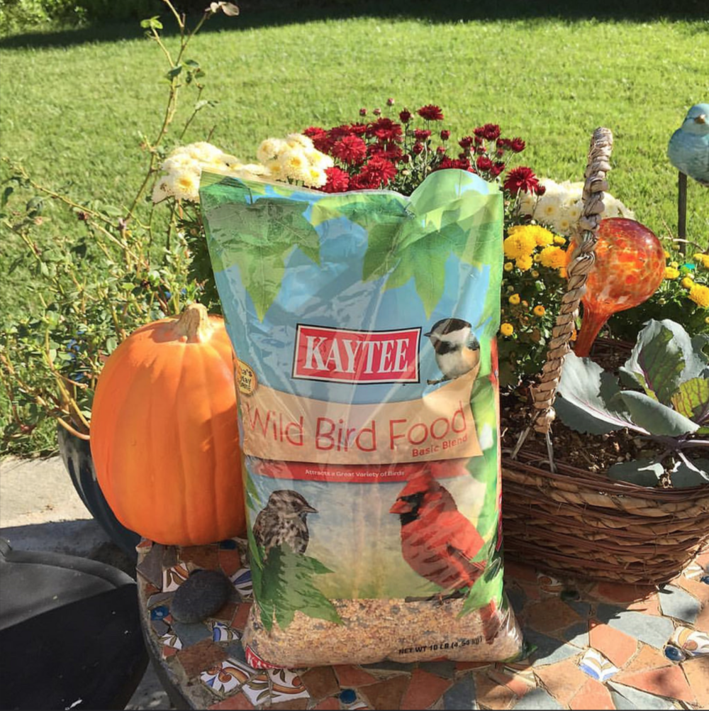 I used wild bird food that finches in our area really like