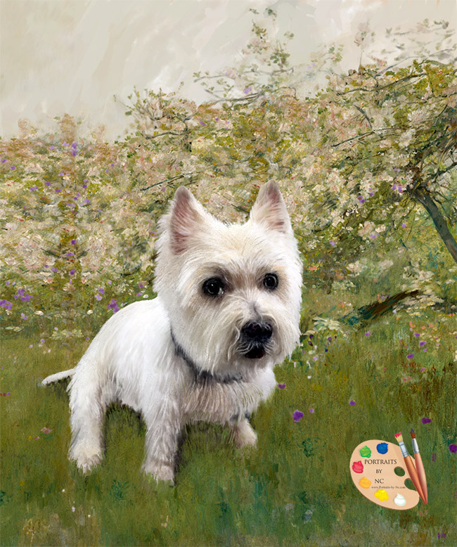 westie-portrait-by-nc.jpg