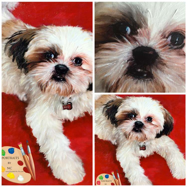 shih-tzu-collage.jpg