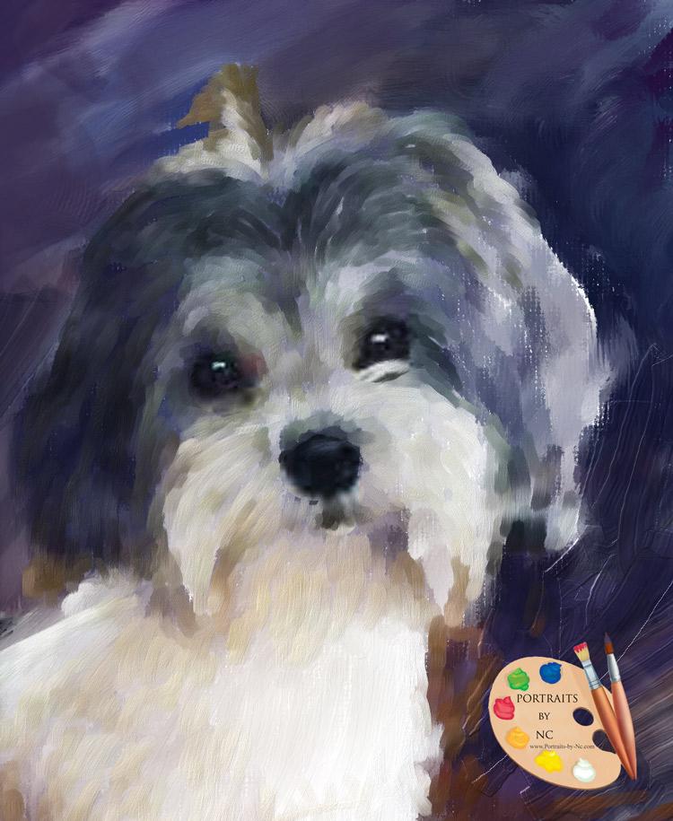 havanese-puppy.jpg