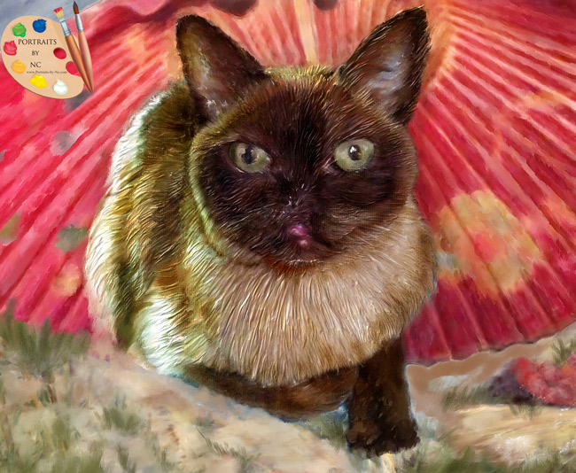 burmese-cat-portraits-by-nc.com