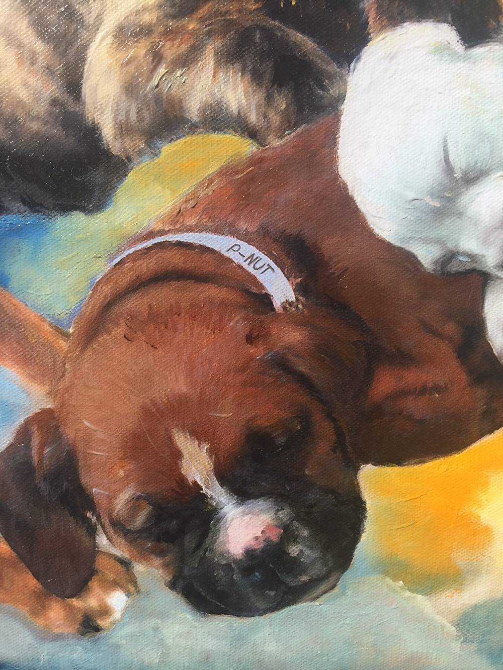 Boxer Puppy Detail