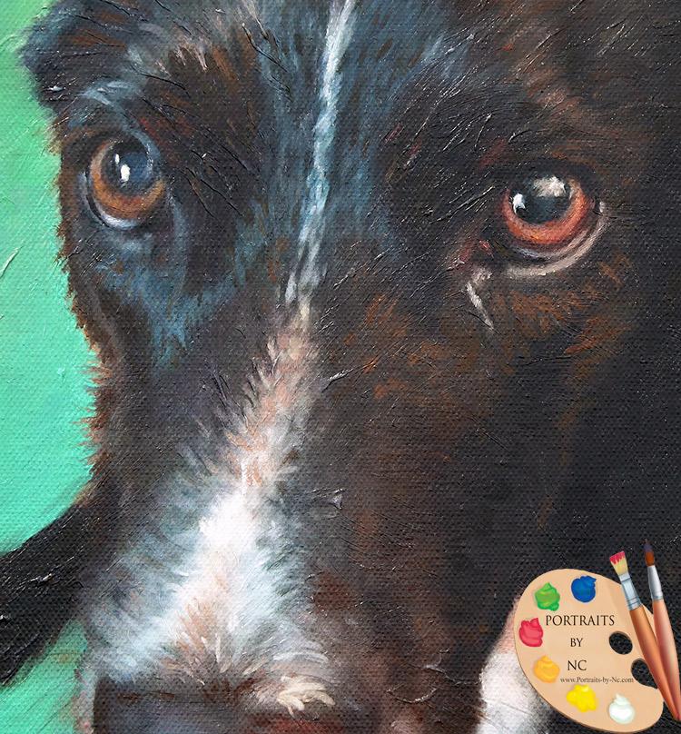 dog-eyes-detail.jpg