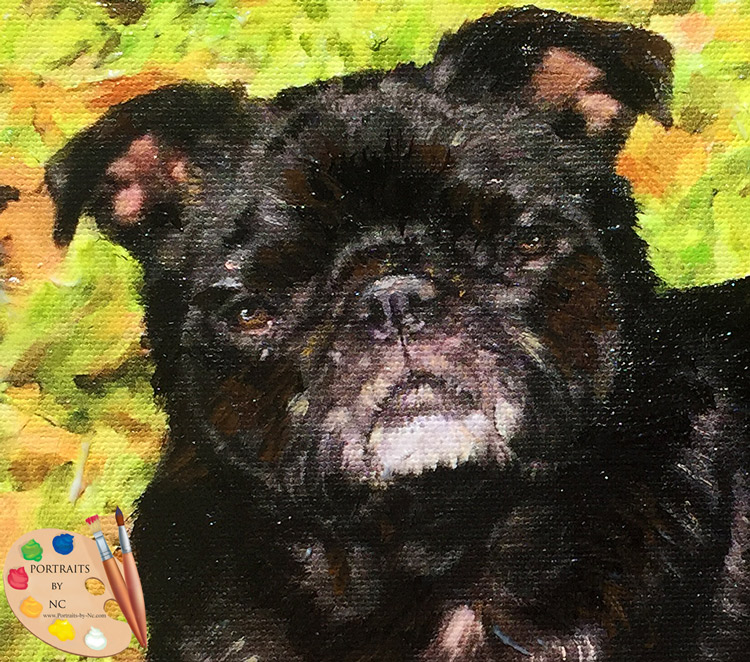Pug by Portraits by NC