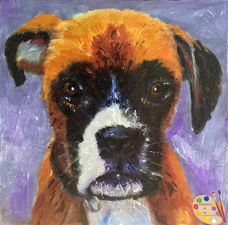 Boxer by Portraits-by-NC.com