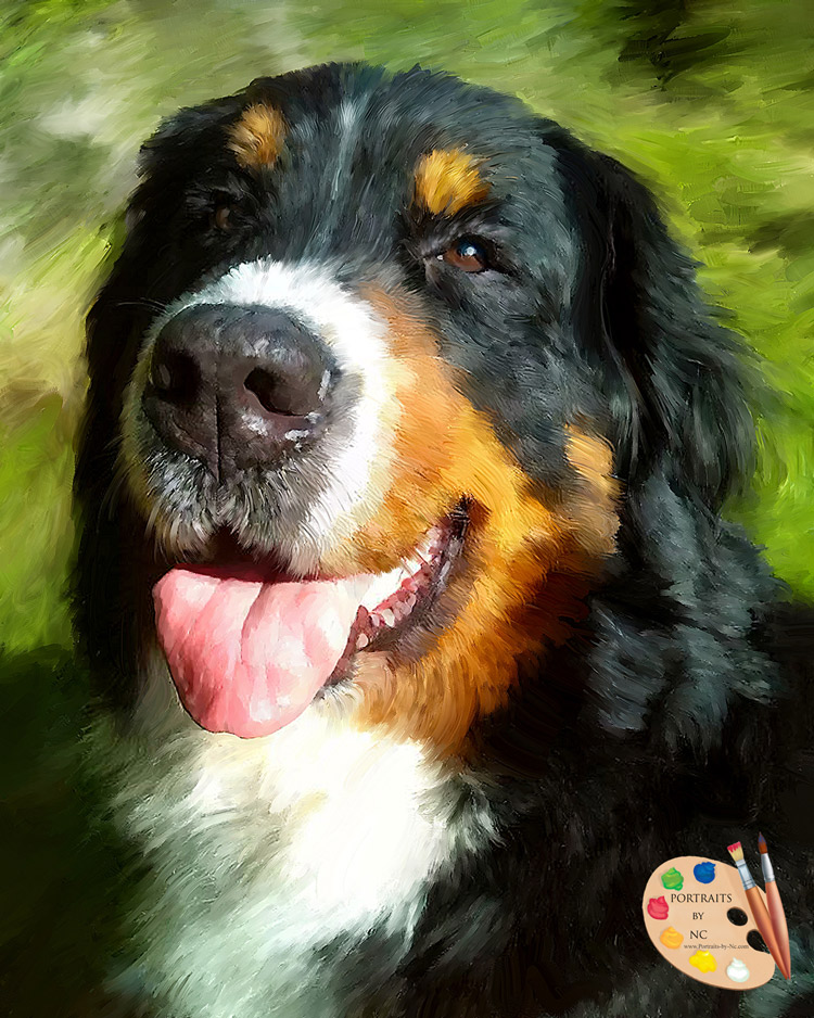 Bernese Mountain Dog - Portraits by NC