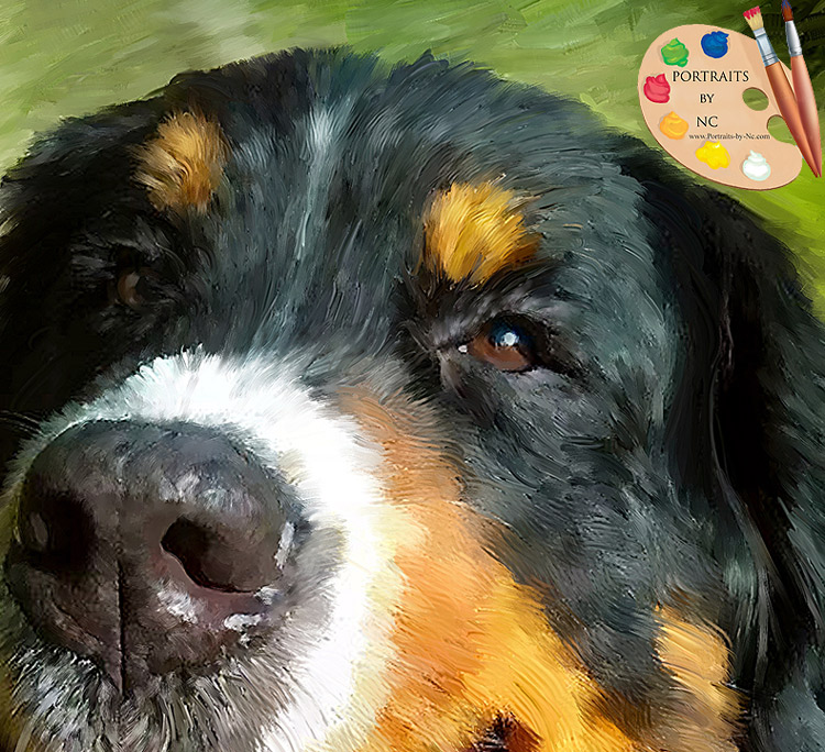 bernese-mountain-dog-eyes