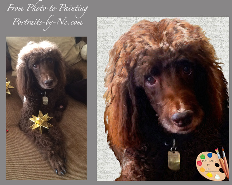 Poodle Before After