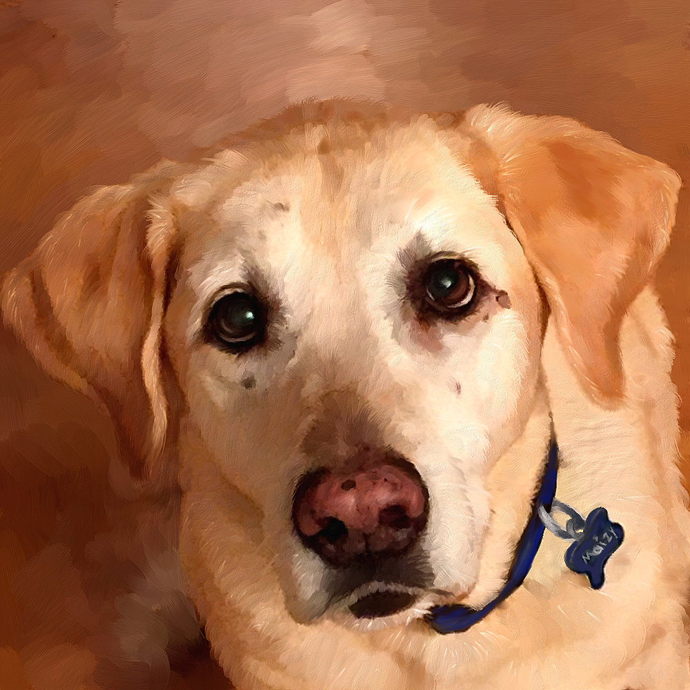 Labrador Portrait of Maizy