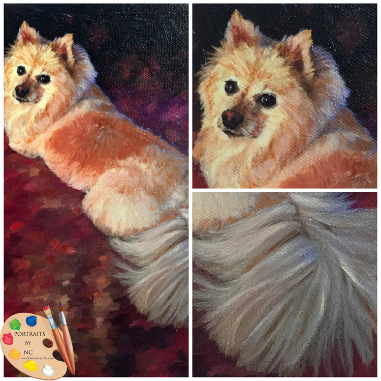 Pomeranian collage