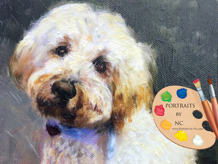 labradoodle head detail