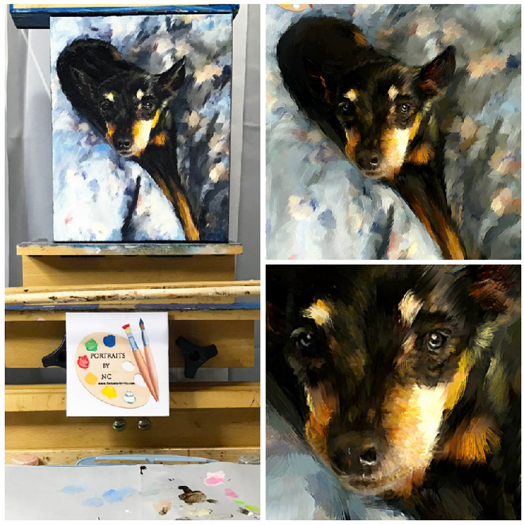 miniature pinscher collage
