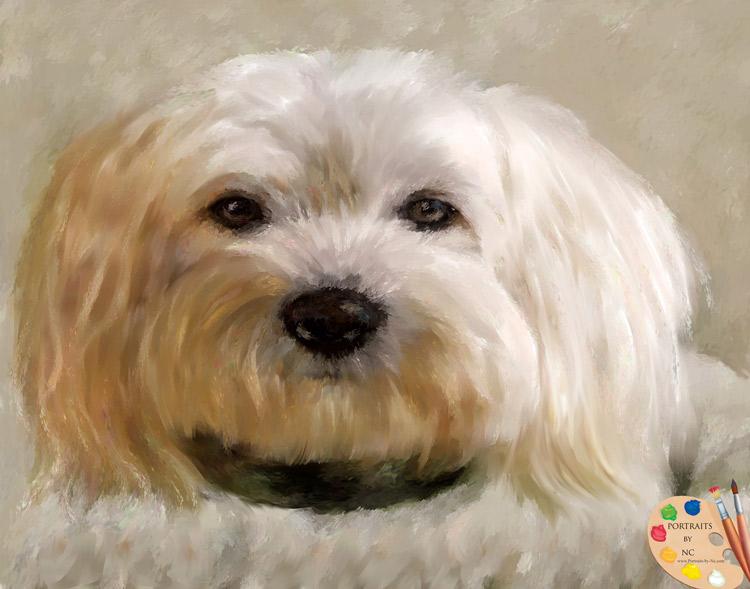 bichon frise portrait