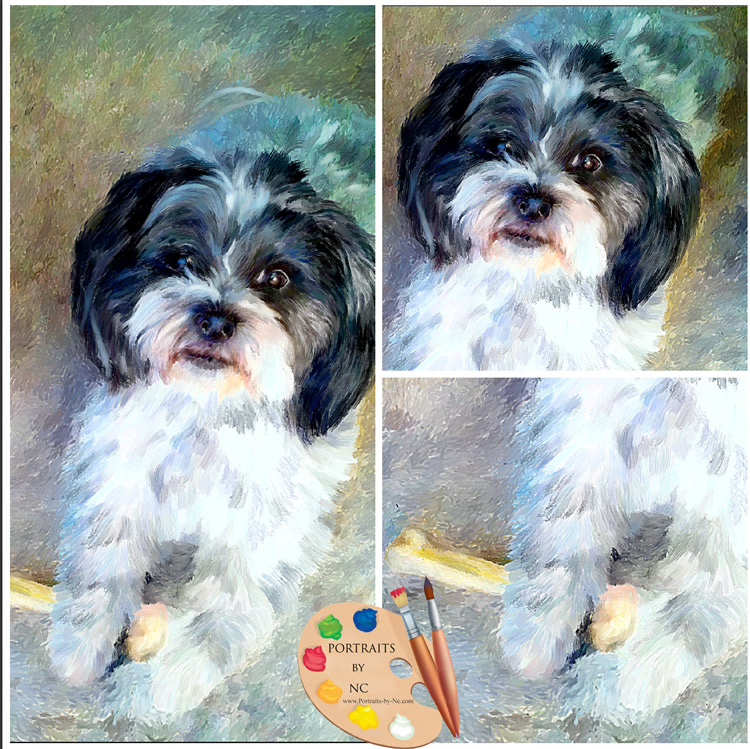 shih tzu collage