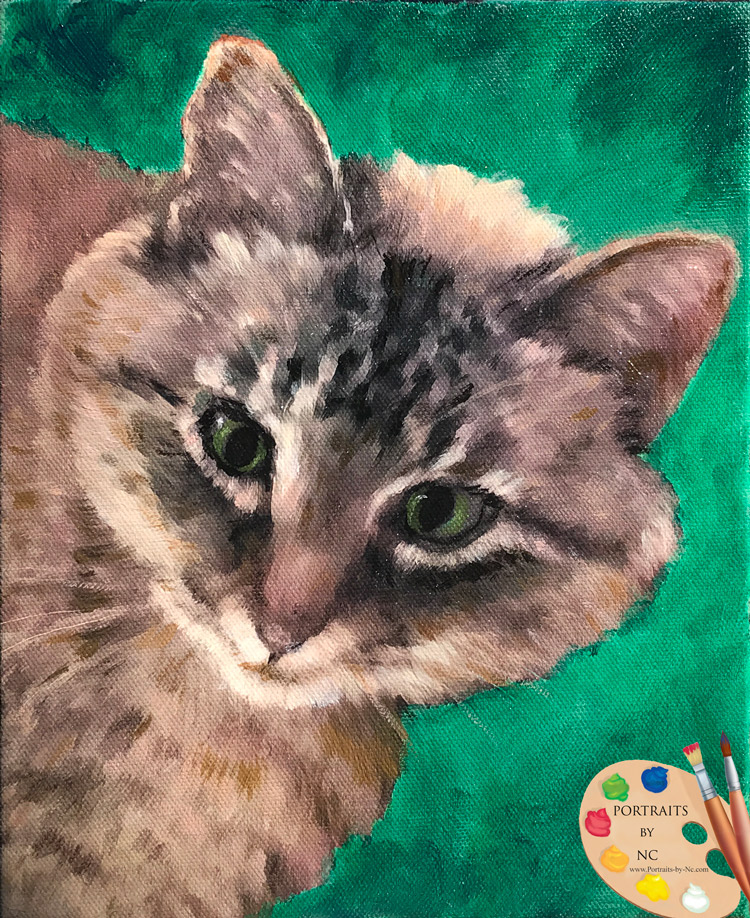 house cat portrait