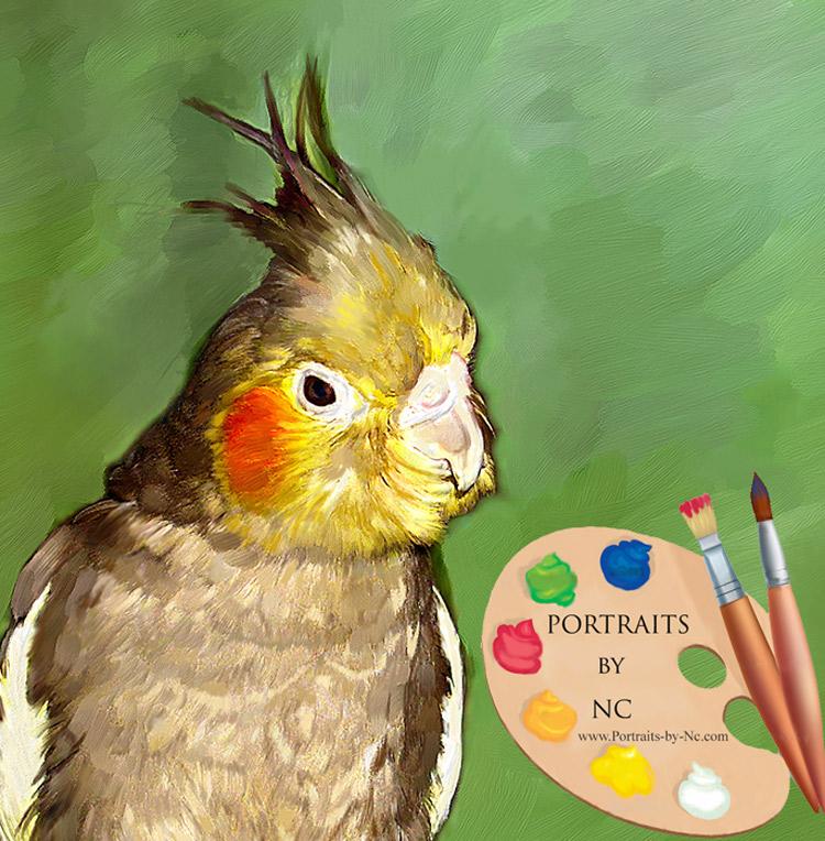 Cockatiel Portrait