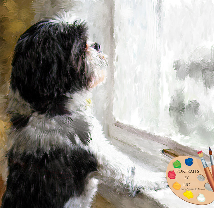 Shih Tzu by Window