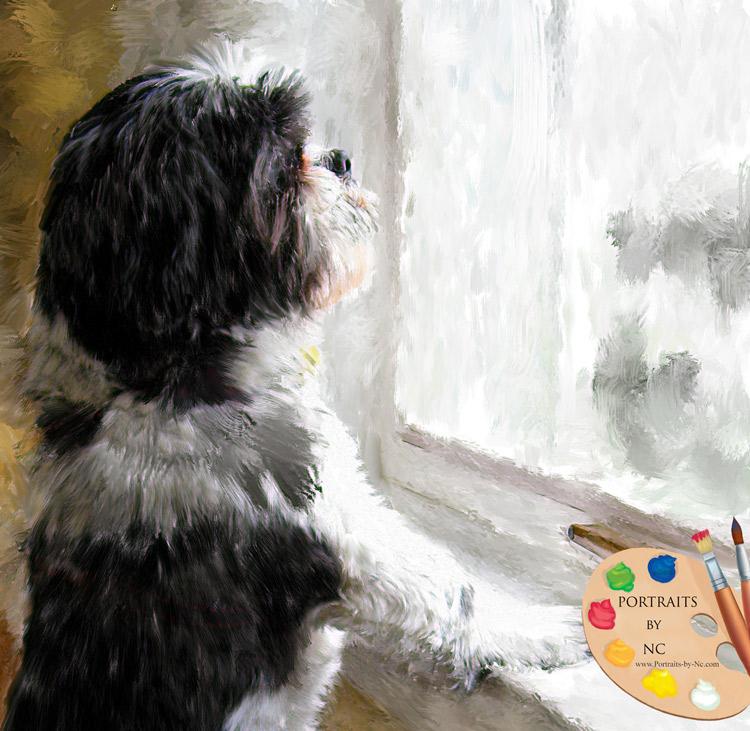 Shih Tzu by Window