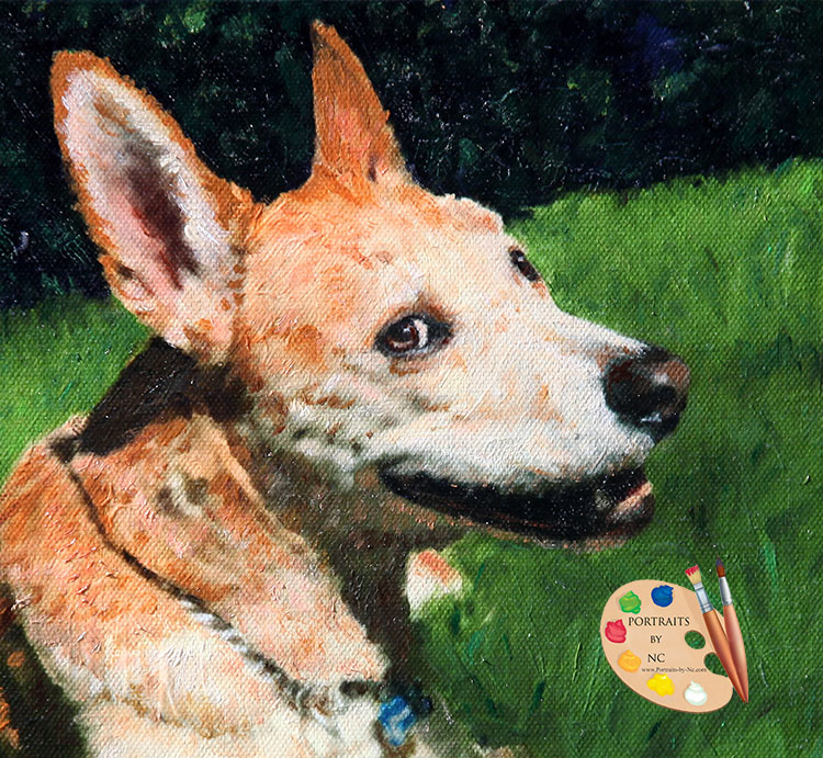 American dingo portrait