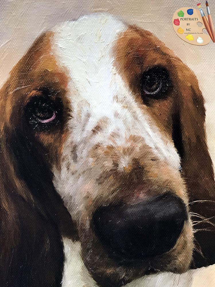 Basset Hound Face