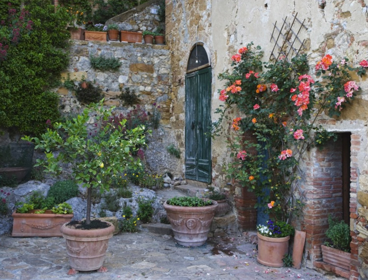 Italy, Petroio. Potted plants decorate a patio Postcard by DanitaDelimont