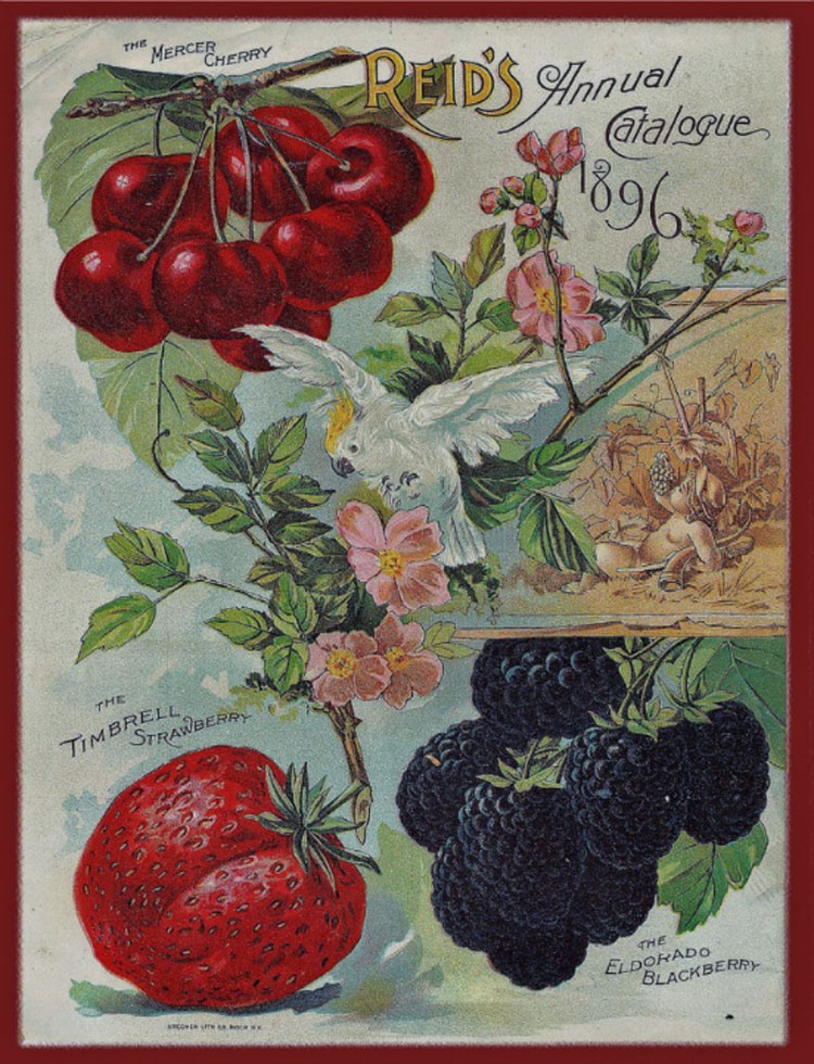 vintage seed catalog cover by earthdaygardens