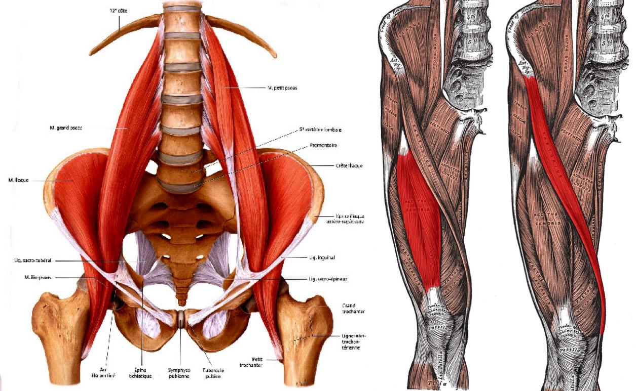Yoga for All-Anatomy for Yoga - The Hip Flexors + Quads with Tahnee