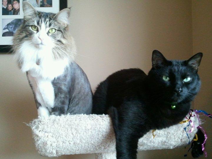Optimus and Kitty