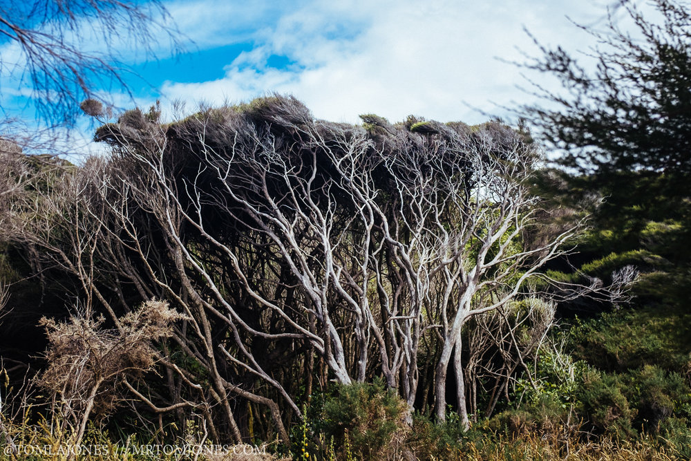 I was loving the shapes and seeming chaos in the branches of these windswept trees.
