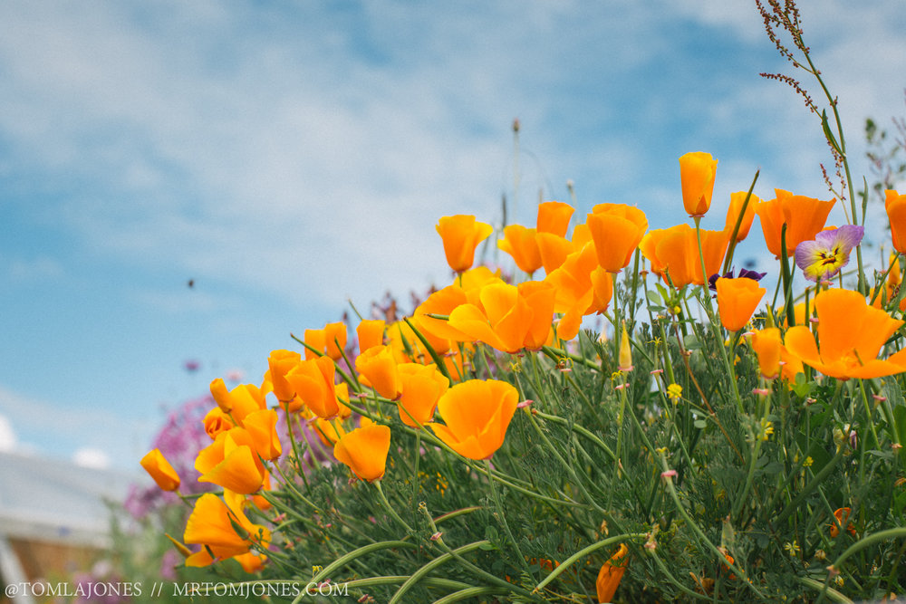 Bright orange flowers shine in the New Zealand sun.