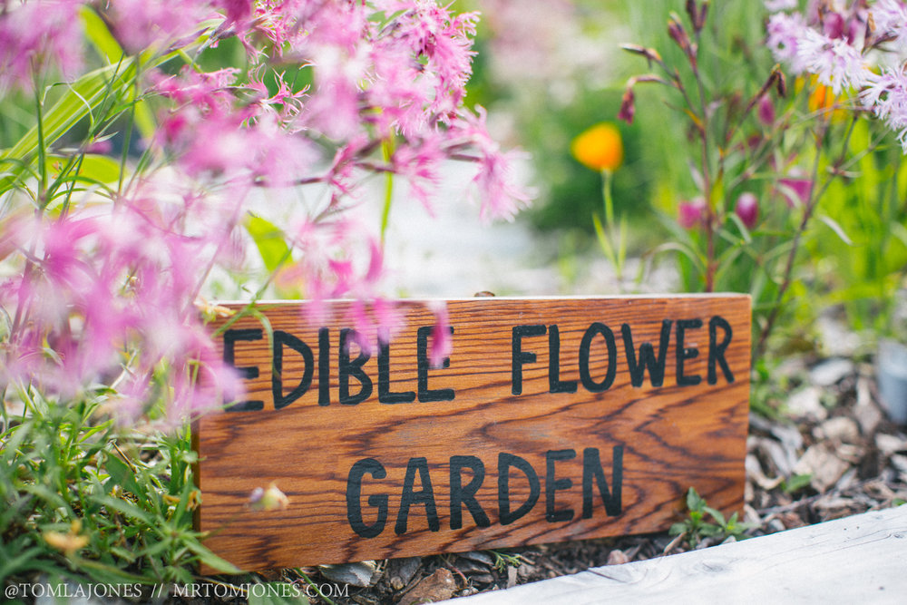 Edible flower garden beside the Aro Ha kitchen adds colour and flavour to everything they serve.