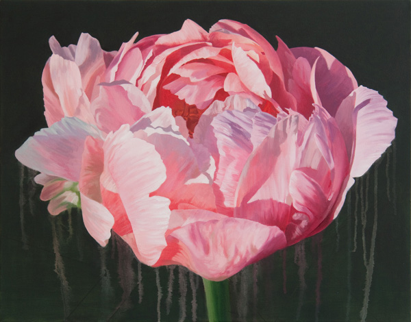 "Peony 2  |  2010  |  oil on canvas  |  22"" x 28"""