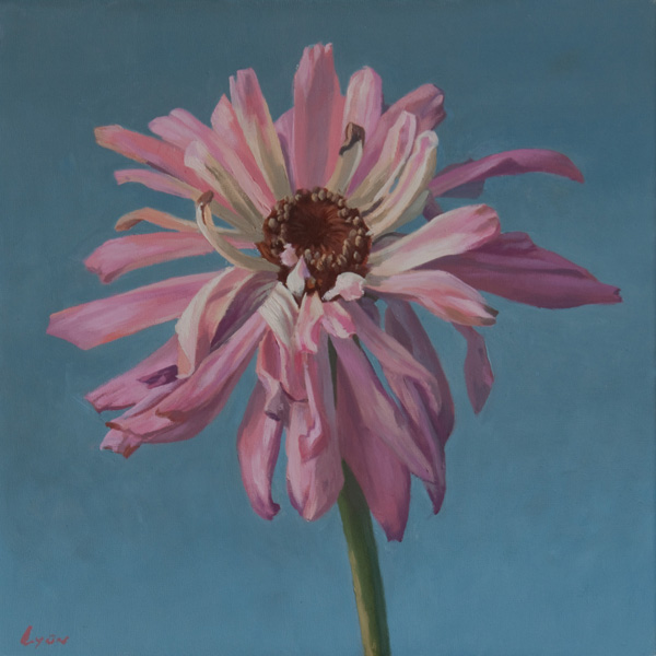 "Zinnia 1 | 2010 | oil on panel | 12"" x 12"""