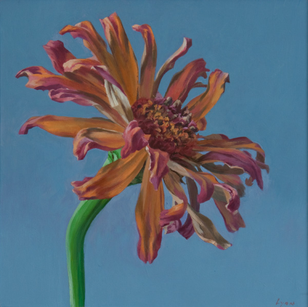 "Zinnia 3 | 2010 | oil on panel | 12"" x 12"""