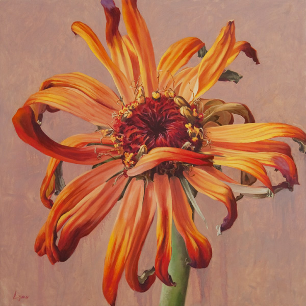 "Zinnia 7 | 2010 | oil on linen | 30"" x 30"""