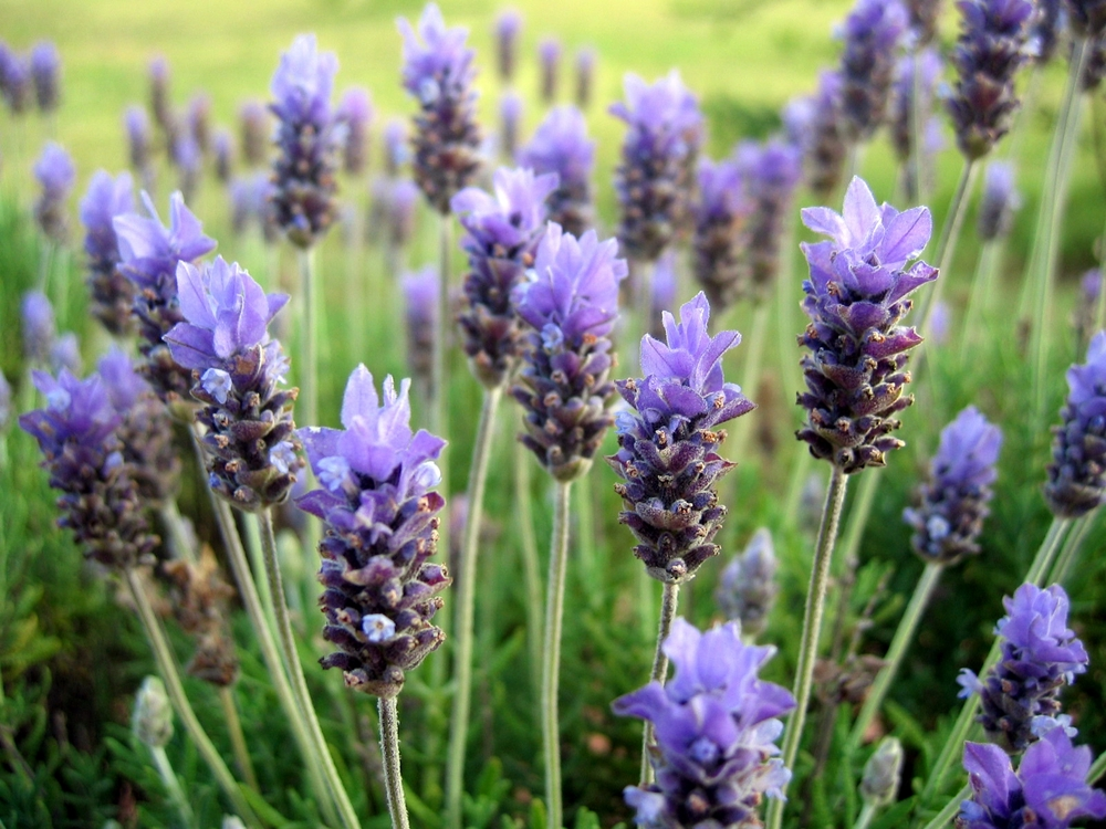 North quadrant marketplace we sell the highest quality products for dried floral arrangements dried poppy pods sage and lavender and strive to deliver the best in customer mightylinksfo