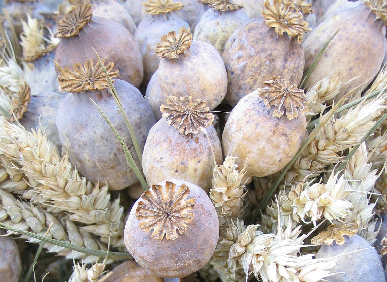 Dried poppy pods 25 kg north quadrant marketplace dried poppy pods 25 kg mightylinksfo